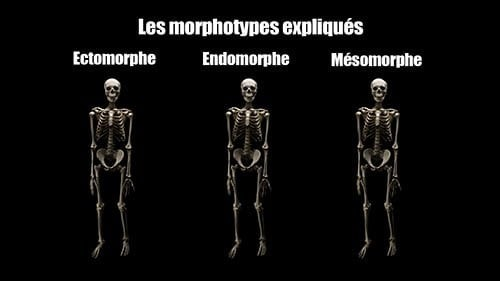 Mythe : les morphotypes en musculation